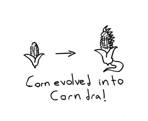 corndra