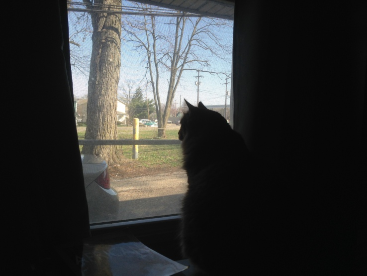 Townes Van Cat taking in the quiet Columbus morning